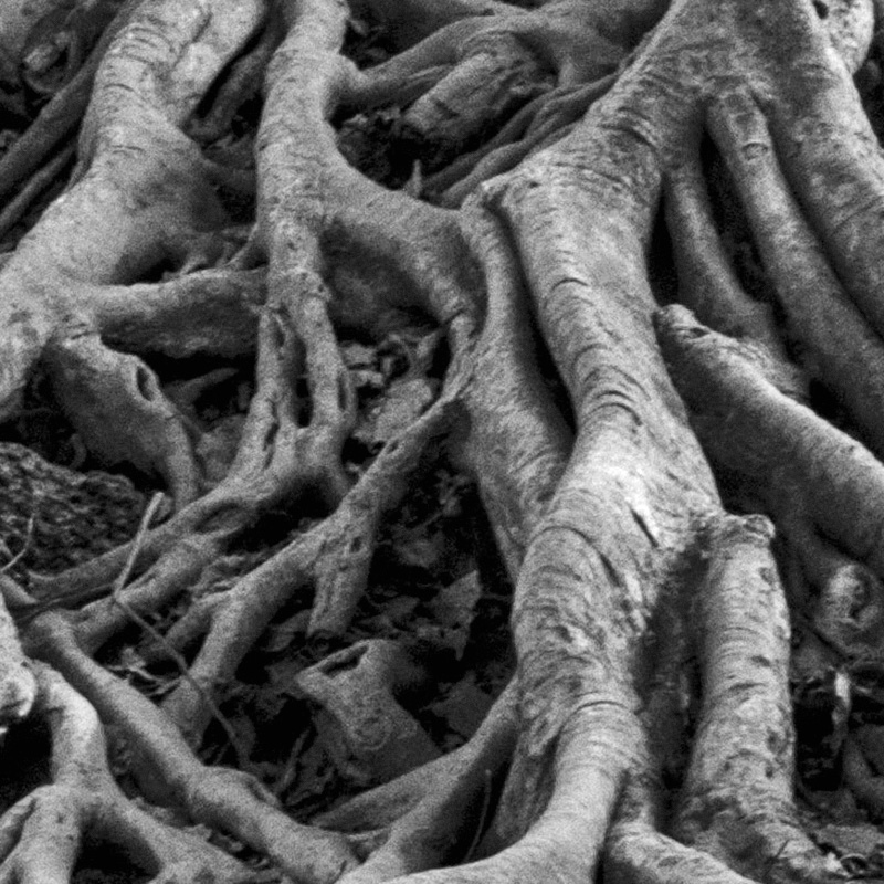 Lesson for June 2, 2019: Rooted in Him (Ephesians 3:8-21)