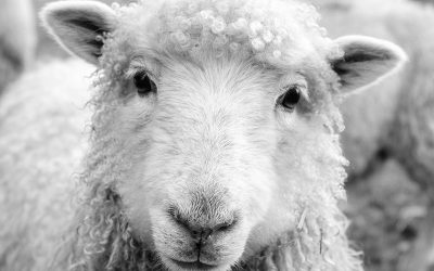 #Faust25: 'No Cloned Sheep'